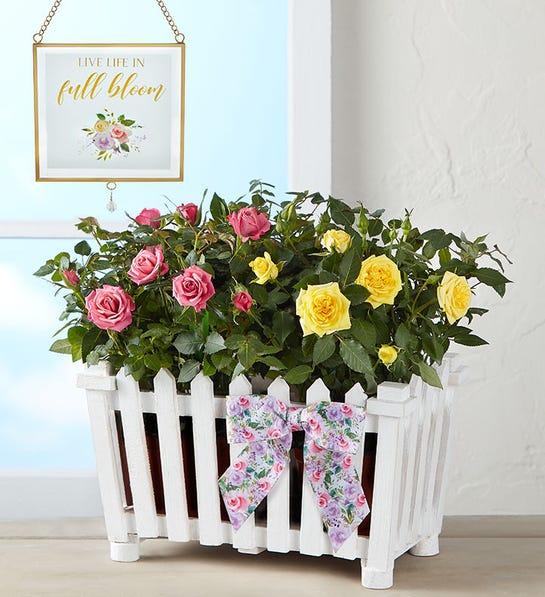 ارسال گل به آمریکا- ارسال هدیه به آمریکا- ارسال کیک به آمریکا - گل رز تازه طبیعی