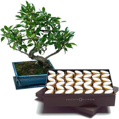 بونسای و شکلات-ارسال هدیه به فرانسه