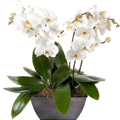 باغچه شیک-ارسال گل به هلند