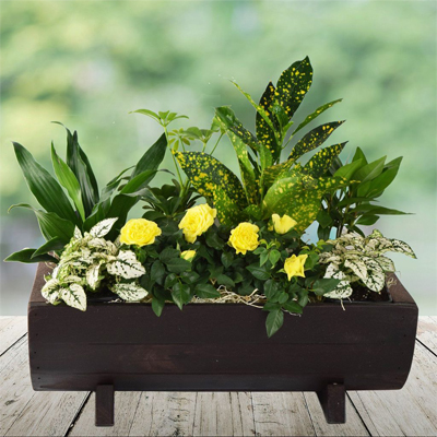 گلدان سبز-ارسال هدیه به کانادا