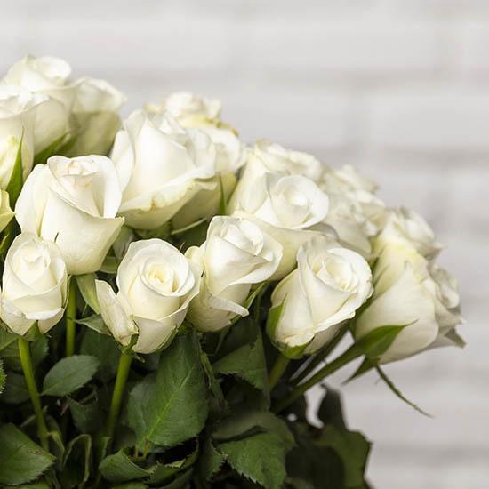 ارسال هدیه به هلند - ارسال گل به هلند-تبریک- تبریک ولنتاین-تبریک تولد- تبریک نوزاد - گل تبریک