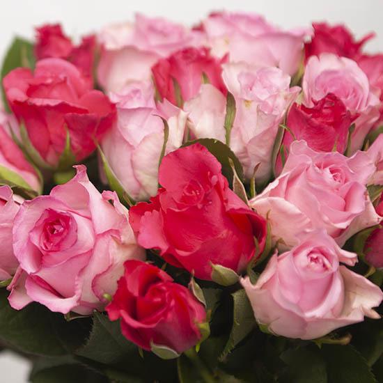 ارسال هدیه به اسپانیا - ارسال گل به اسپانیا-تبریک- ولنتاین- رز قرمز- صورتی – رز