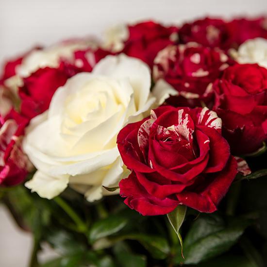 رز رمانتیک- ارسال هدیه به فرانسه