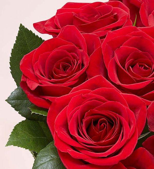 ارسال رز به آمریکا - ارسال گل به آمریکا - ارسال هدیه به آمریکا -