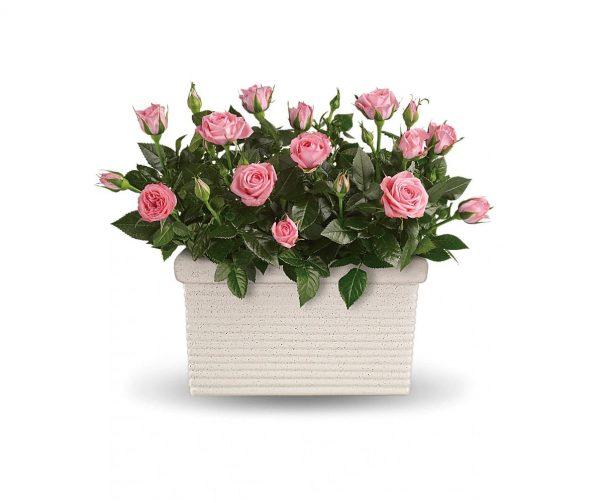 ارسال هدیه به کانادا – گل – عشق – سال نو – تشکر و قدردانی – تبریک – کریسمس – تبریک- گل – ارسال گل به کانادا